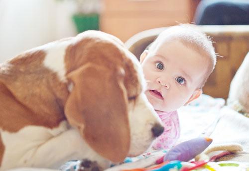 beagle-allegro